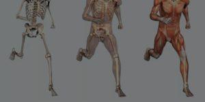 anatomia_metodologia